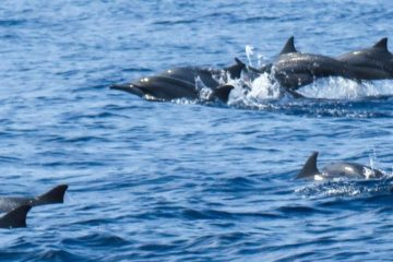 Dolphin Watching Salalah